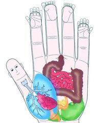 points d'acupression des mains