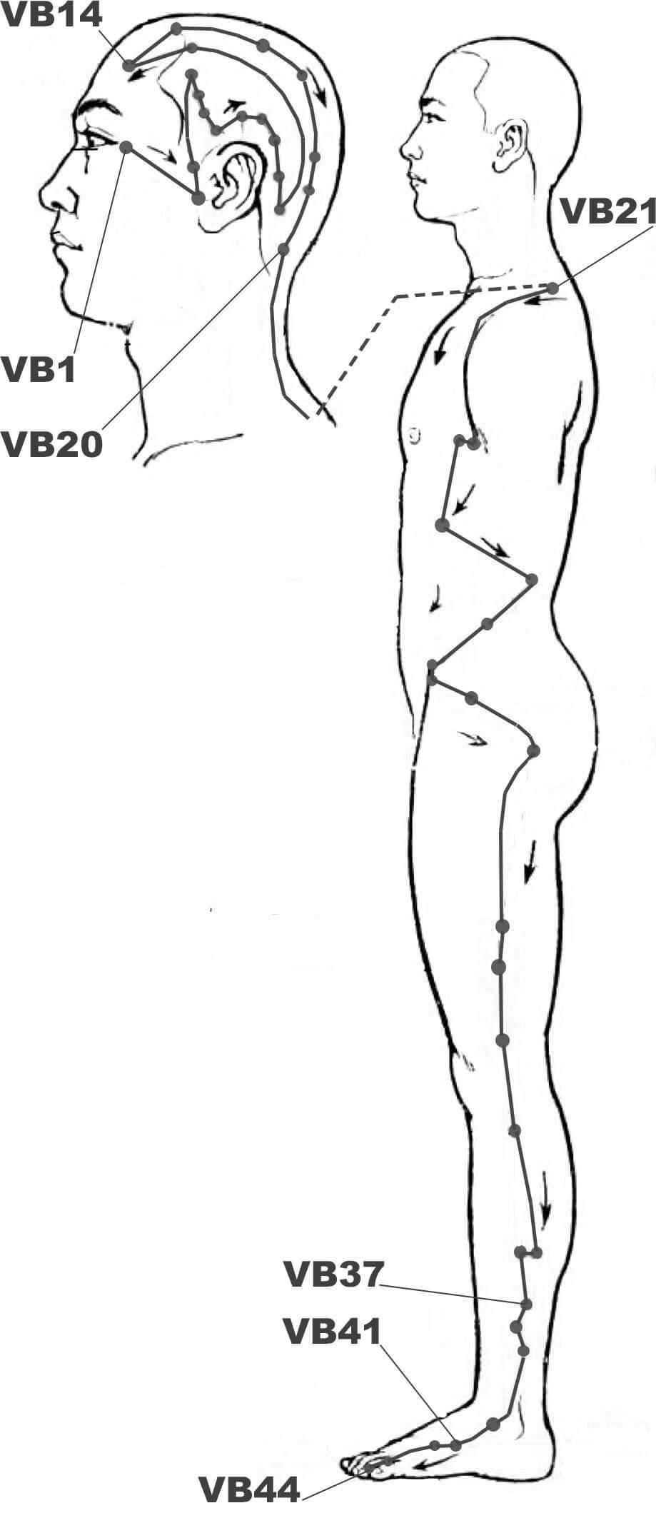 Méridien de la Vésicule Biliaire