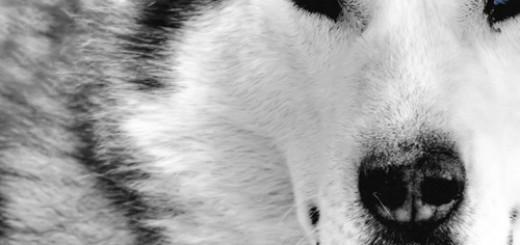 Le loup intérieur
