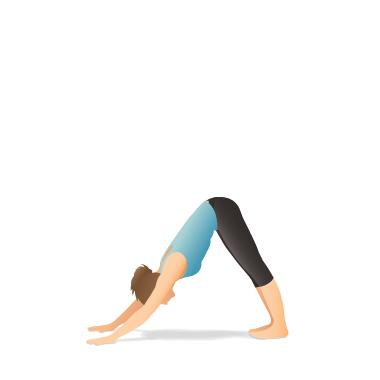 Asana yoga: Chien Tête en Bas (Adho Mukha Svanasana)